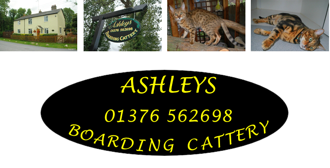 Ashleys Boarding Cattery